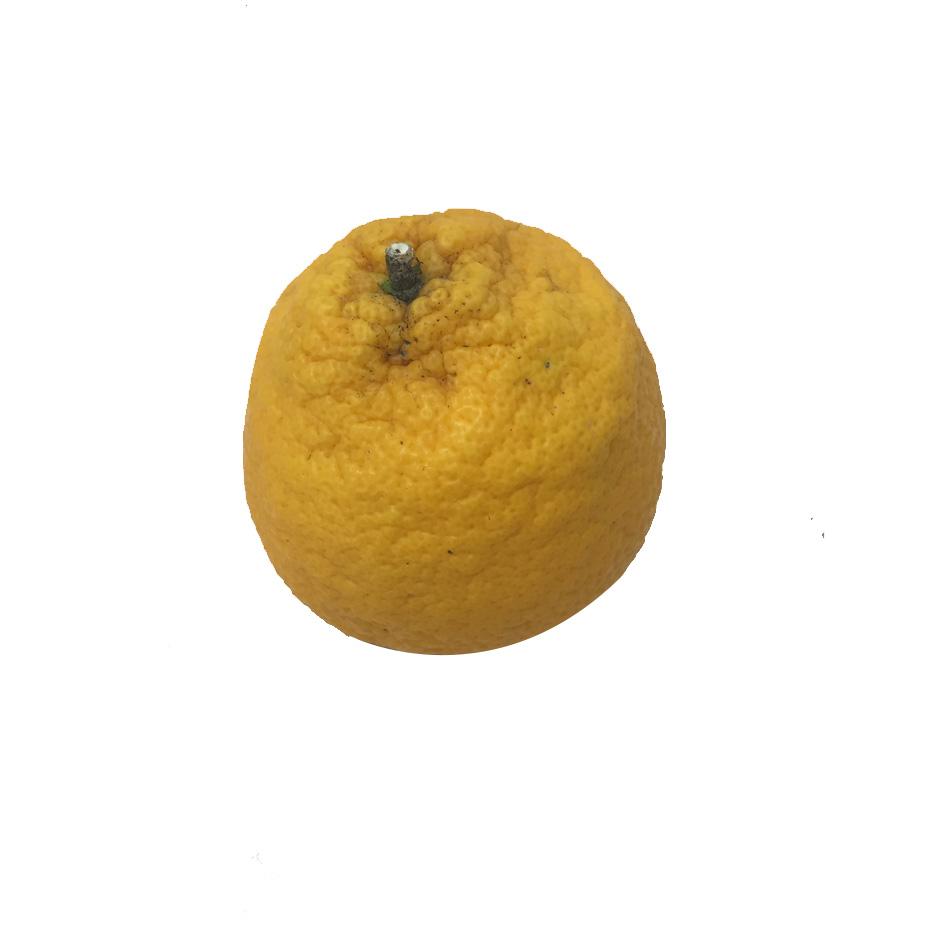 Orange Bio NAVELATE